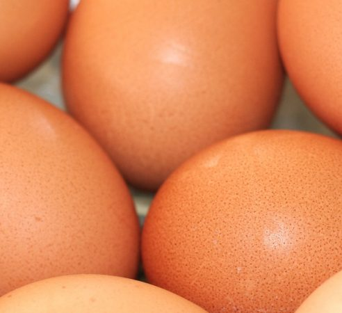 food-brown-chicken-shell-egg-close-up-495273-pxhere.com